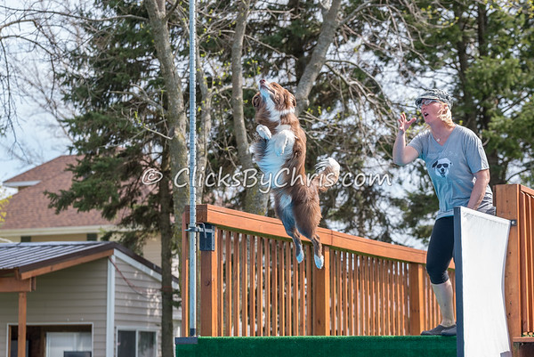 UpDog Challenge - Southtown K9 - Saturday, April 15, 2017