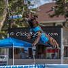 NADD / AKC Trial - Saturday, May 2, 2015 - Frame: 5814
