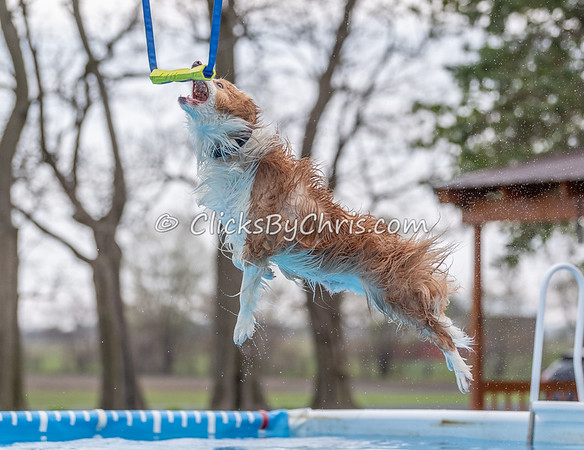 NADD / AKC Dock Diving Trial Held at Southtown K9 on Friday, May 3, 2019