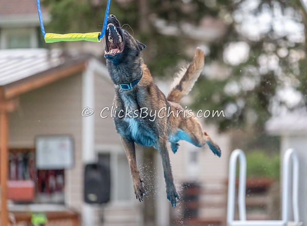 NADD / AKC Dock Diving Trial - Air Retrieve - Southtown K9 - Friday, May 3, 2019