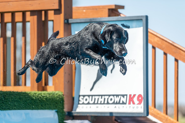 NADD / AKC Dock Diving Trial Held at Southtown K9 on Saturday, May 4, 2019