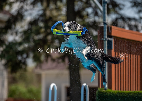 NADD / AKC Dock Diving Trial Held at Southtown K9 on Sunday, May 5, 2019