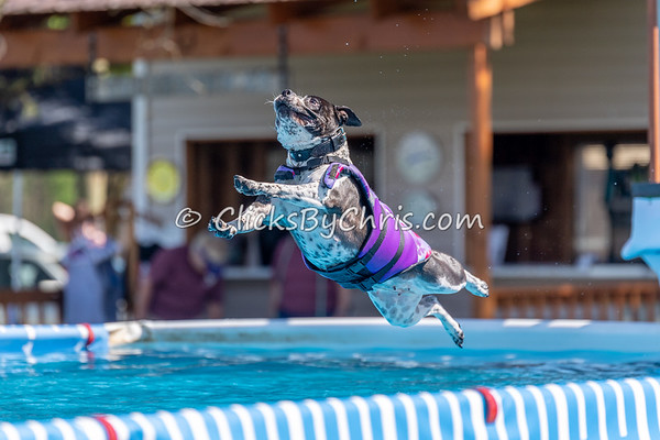 NADD / AKC Dock Diving Trial - Southtown K9 - Sunday, May 6, 2018