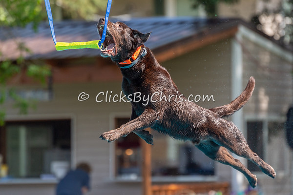 NIKA Dock Diving - Northern Illinois K9 Association - Southtown K9 - Saturday, May 19, 2018