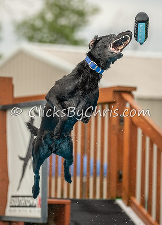 NIKA Memorial Day Bash 2019 - Dock Jumping Held at Southtown K9 on Monday, May 27, 2019