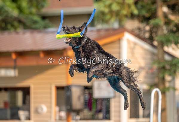 NADD / AKC Dock Diving Trial Held at Southtown K9 on Friday, May 31, 2019
