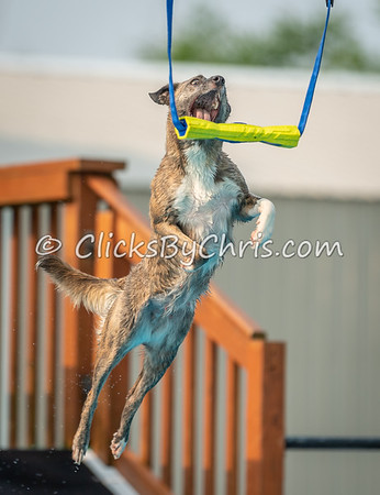 NADD / AKC Dock Diving Trial Held at Southtown K9 on Saturday, June 1, 2019