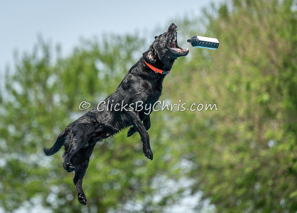 NADD / AKC Dock Diving Trial Held at Southtown K9 on Sunday, June 2, 2019