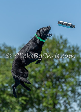 NADD / AKC Dock Diving Trial - Southtown K9 - Sunday, June 3, 2018