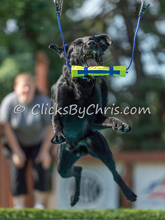NADD / AKC Dock Diving Competition at Southtown K9 on Saturday, June 6, 2020