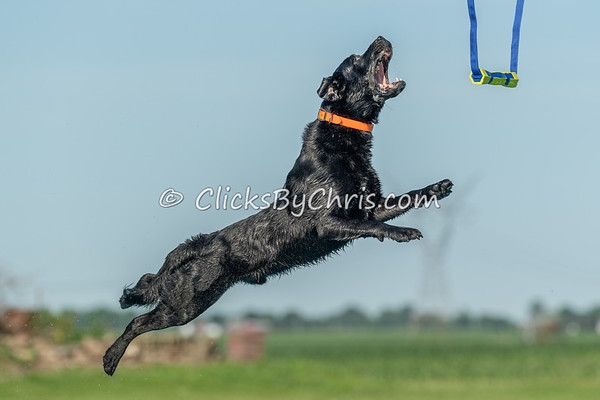 NADD / AKC Dock Diving Competition at Southtown K9 on Sunday, June 7, 2020