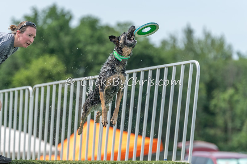 UKC Premiere - Kalamazoo County Expo Center & Fairground - Friday, June 15, 2018