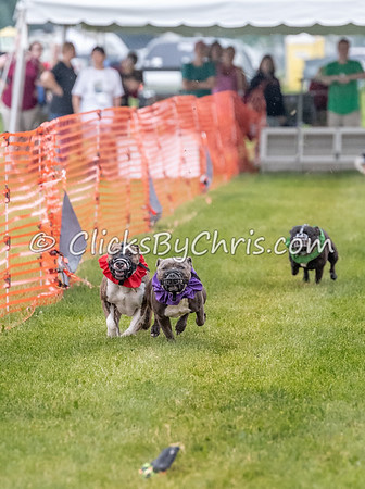 UKC Premiere - Kalamazoo County Expo Center & Fairground - Saturday, June 16, 2018