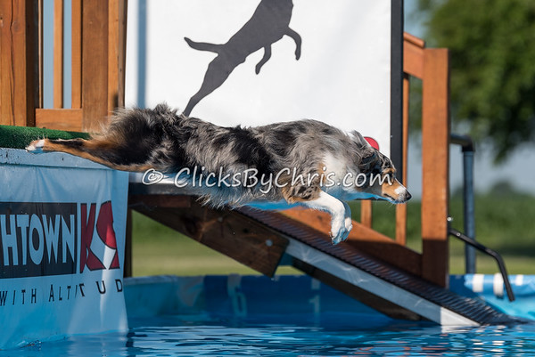 Dock Diving Competition - Southtown K9 - Sunday, June 19, 2016