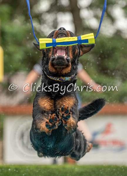 NADD / AKC Dock Diving - Southtown K9's Air Retrieve and Hydro Dash Bash Competition - at Southtown K9 on Saturday, June 20, 2020