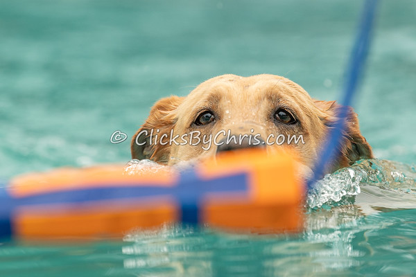 NADD / AKC Dock Diving - Southtown K9's Air Retrieve and Hydro Dash Bash Competition at Southtown K9 on Saturday, June 20, 2020