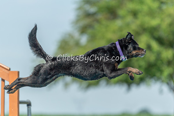 NIKA / UKC Dock Diving at Southtown K9 on Saturday, June 27, 2020