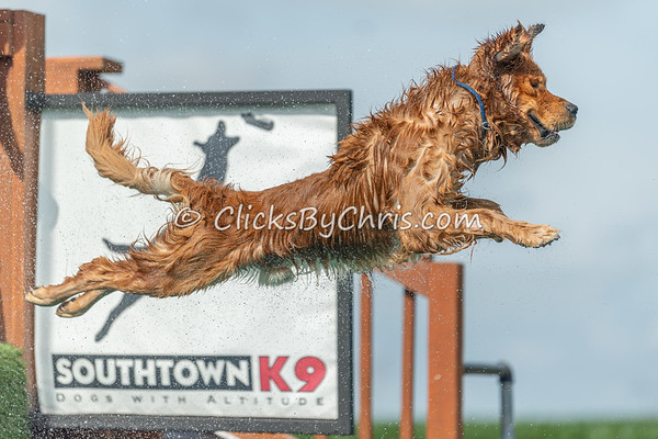 This photograph was captured by Chris Davis from Clicks by Chris during the NIKA / UKC Dock Diving event held at Southtown K9 in Rock Falls, Illinois on Sunday June 28, 2020 at 9:21AM. AAA5589. Fee-liable image, © Copyright 2020 Chris Davis Clicks by Chris