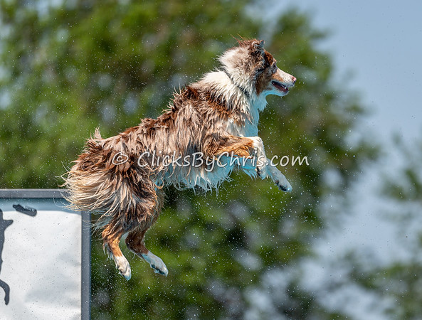 NIKA Dock Diving - Northern Illinois K9 Association - Southtown K9 - Saturday, June 29, 2019