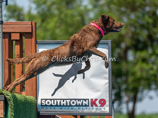 NIKA Dock Diving - Northern Illinois K9 Association - Southtown K9 - Saturday, June 29, 2019