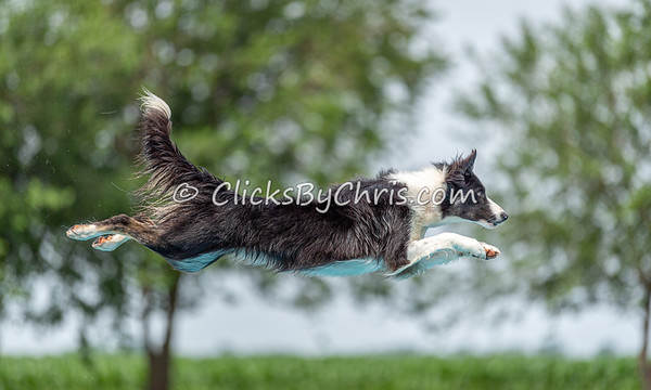 NIKA Dock Diving - Northern Illinois K9 Association - Southtown K9 - Sunday, June 30, 2019