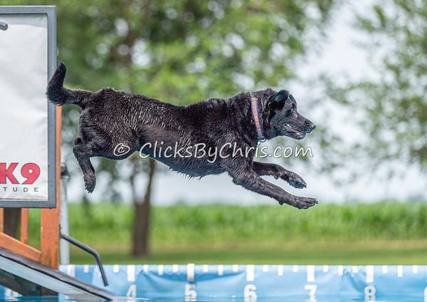 NIKA Dock Diving - Northern Illinois K9 Association - Southtown K9 - Sunday, June 30, 2019
