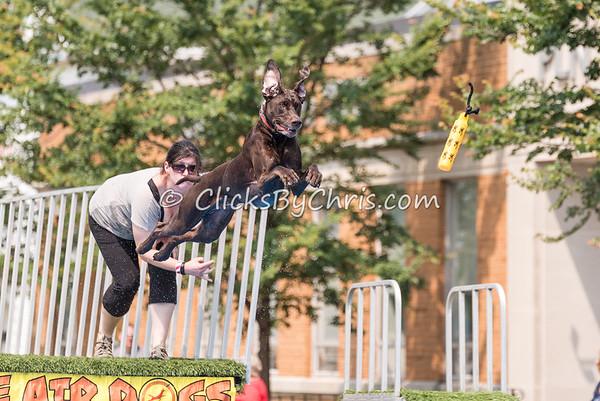 UAD Petunia Festival - Saturday, July 4, 2015 - Frame: 5633