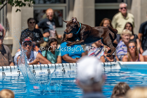 UAD / UKC Dock Diving - Petunia Festival -  - Saturday, July 7, 2018