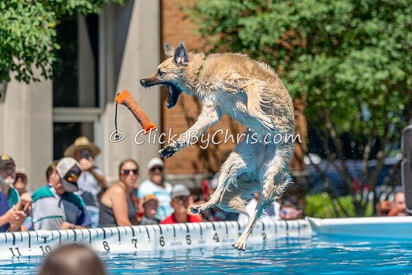 UAD / UKC Dock Diving - Petunia Festival -  - Sunday, July 8, 2018
