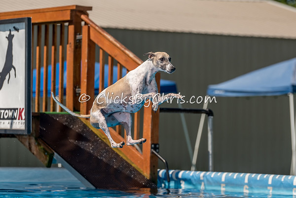 Dock Diving Competition - Southtown K9 - Saturday, July 8, 2017