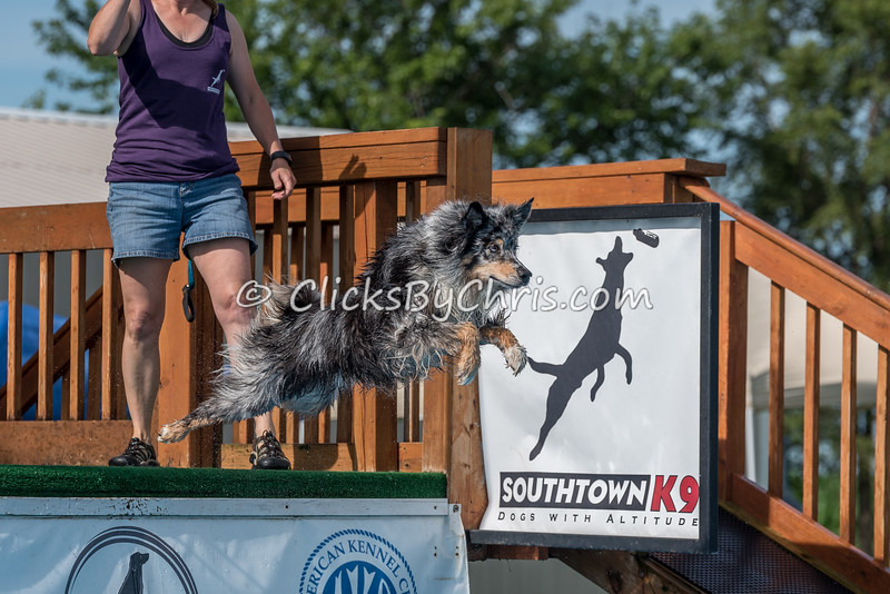 NADD / AKC Dock Diving Trial - Southtown K9 - Sunday, July 10, 2016