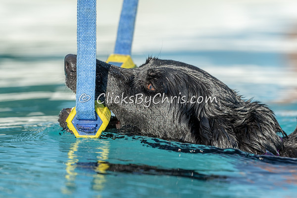 Hydro Dash - NADD / AKC Dock Diving - National Qualifiers at Southtown K9 on Friday, July 10, 2020