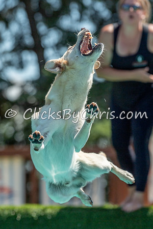 Misc - NADD / AKC Dock Diving - National Qualifiers at Southtown K9 on Saturday, July 11, 2020