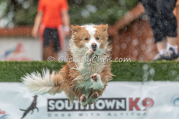Distance - NADD / AKC Dock Diving - National Qualifiers at Southtown K9 on Saturday, July 11, 2020