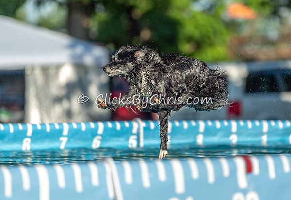 NADD / AKC Dock Diving Trial - Southtown K9 - Friday, July 12, 2019