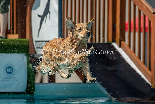 NADD / AKC Dock Diving Trial - Southtown K9 - Saturday, July 13, 2019