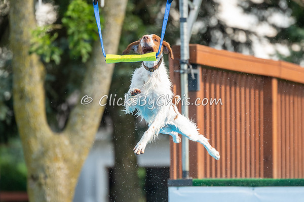 NADD / AKC Dock Diving Trial - National Qualifier - Southtown K9 - Sunday, July 15, 2018