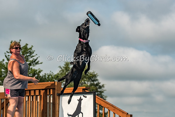 Dock Diving Competition - Southtown K9 - Saturday, July 23, 2016