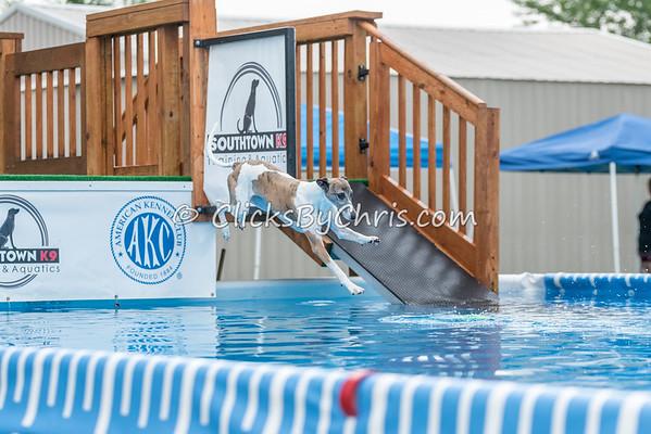 NADD / AKC National Qualifier - Sunday, July 26, 2015 - Frame: 8089