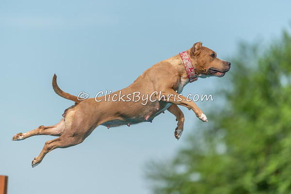 Distance - NIKA / UKC Dock Diving at Southtown K9 on Saturday, July 25, 2020