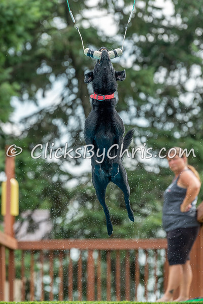 Vertical - NIKA / UKC Dock Diving at Southtown K9 on Saturday, July 25, 2020
