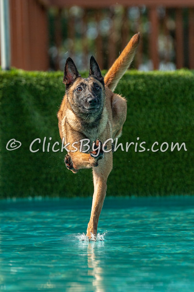 Distance - NIKA / UKC Dock Diving at Southtown K9 on Sunday, July 26, 2020