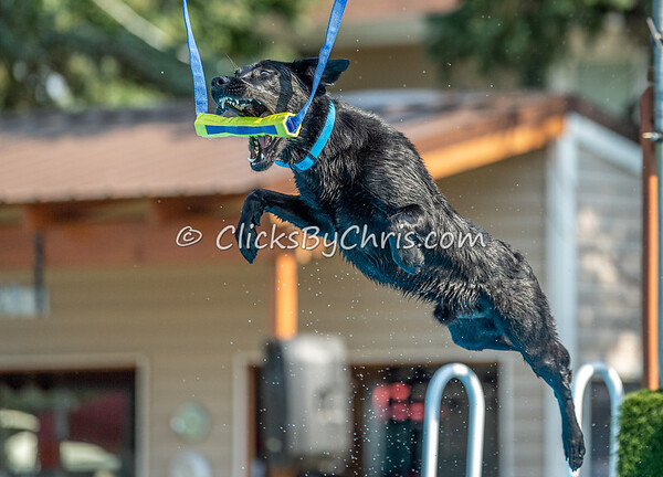 NIKA Dock Diving - Northern Illinois K9 Association - Southtown K9 - Saturday, July 27, 2019