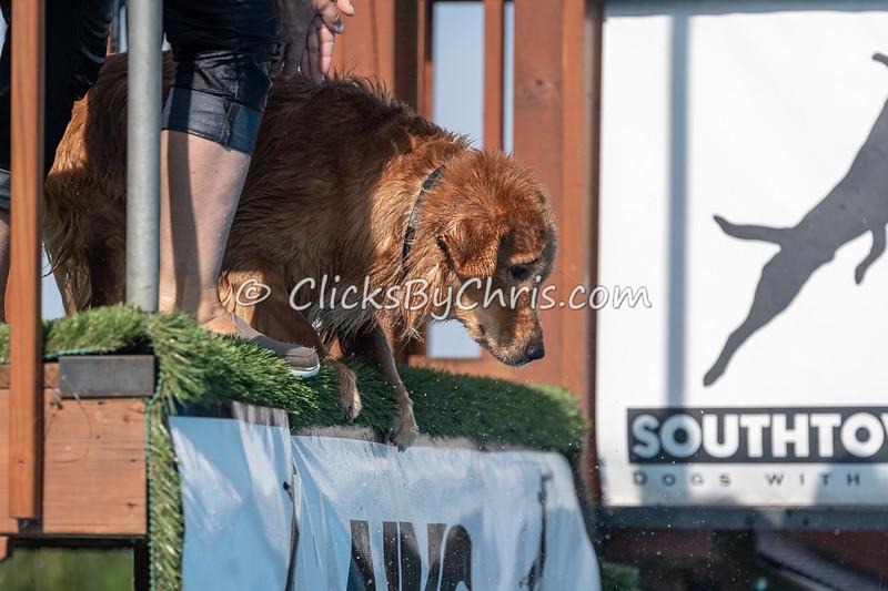 NIKA Dock Diving - Northern Illinois K9 Association - Southtown K9 - Saturday, July 28, 2018