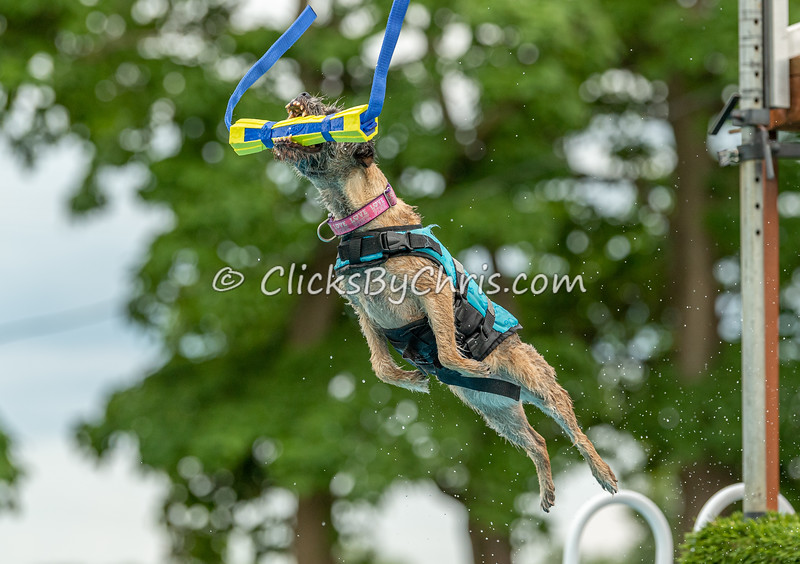 Air Retrieve - NADD / AKC Dock Diving at Southtown K9 on Friday, July 31, 2020