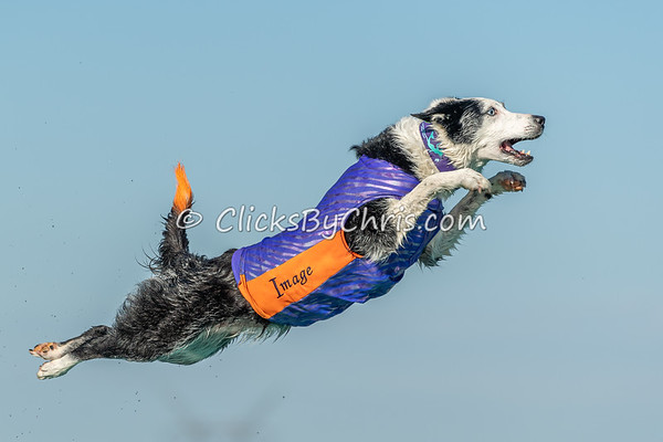 Air Retrieve - NADD / AKC Dock Diving at Southtown K9 on Sunday, Aug. 2, 2020