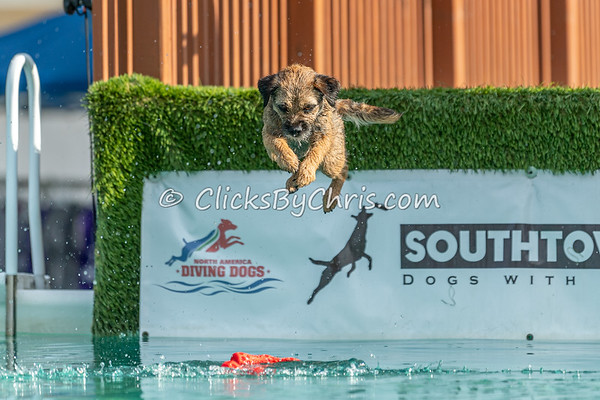 AKC TV Finals - Distance - NADD / AKC Dock Diving at Southtown K9 on Sunday, Aug. 2, 2020