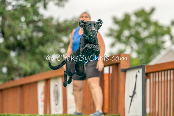 Distance - NADD / AKC Dock Diving at Southtown K9 on Sunday, Aug. 2, 2020