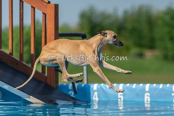 NADD / AKC Dock Diving Trial - Southtown K9 - Saturday, Aug. 4, 2018