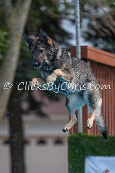 NADD / AKC Dock Diving Trial - Southtown K9 - Sunday, Aug. 5, 2018